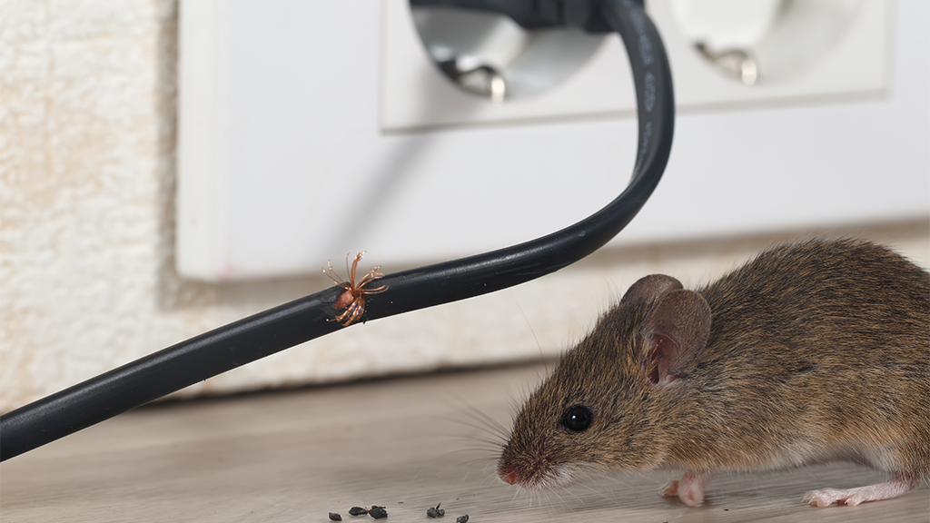 mouse next to a cord