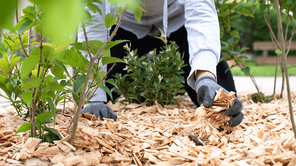 person holding mulch