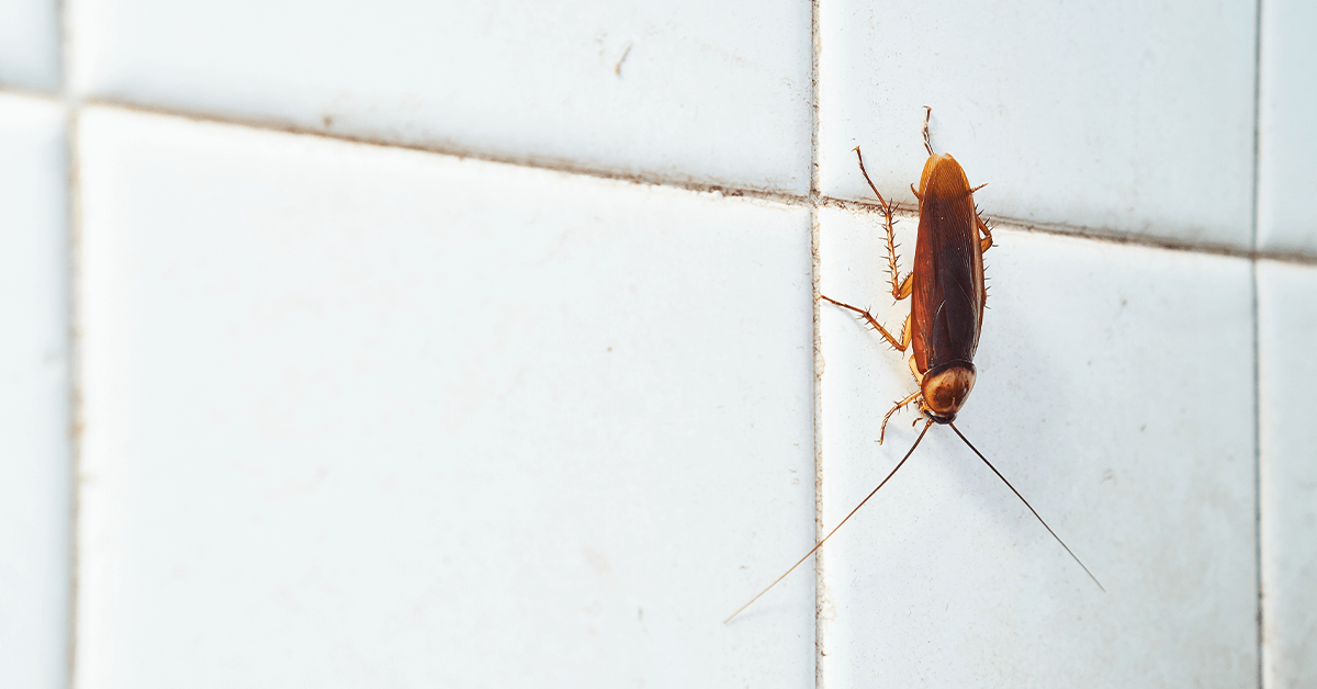 Which Roach is Which? How to Identify and Remove Cockroach Species